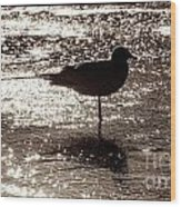 Gull In Silver Tidal Pool Wood Print