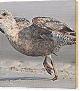 Gull Taking Off Wood Print