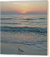 Gulls At Sunset On The Gulf Wood Print