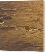 Gulls Searching For A Meal Wood Print