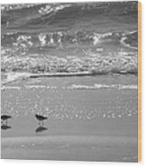 Gulls Taking A Walk Wood Print