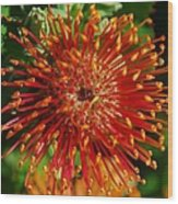 Gum Flower Wood Print