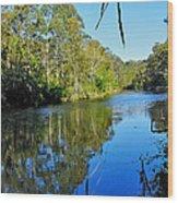 Gums Along The River Wood Print