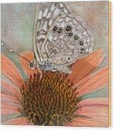 Hackberry Emplorer Butterfly Wood Print