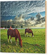 Hailey's Horses Wood Print