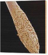 Hair Root, Sem Wood Print