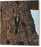 Hairy Woodpecker On Pine Tree Wood Print