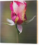 Half-a-rose Wood Print