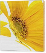 Half Yellow Gerbera Wood Print