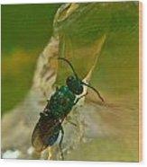 Halicid Bee 12 Wood Print