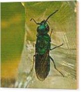 Halicid Bee 15 Wood Print