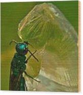 Halicid Bee 17 Wood Print