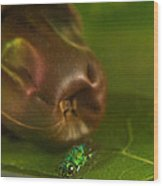 Halicid Bee 2 Wood Print