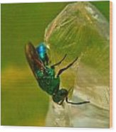 Halicid Bee 20 Wood Print