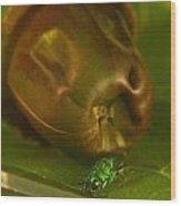 Halicid Bee 4 Wood Print