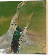 Halicid Bee11 Wood Print
