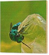 Halicid Wasp 1 Wood Print