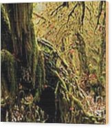 Hall Of Mosses Wood Print