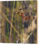 Halloween Pennant Dragonfly Wood Print