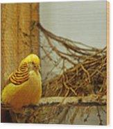 Halloween Yellow Bird Wood Print
