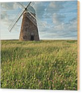Halnaker Windmill On A July Afternoon Wood Print