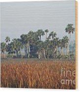 Hammock, Everglades National Park Wood Print