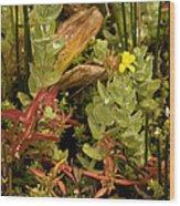 Hampshire Purslane (ludwigia Palustris) Wood Print by Bob Gibbons
