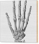 Hand Anatomy, Artwork Wood Print