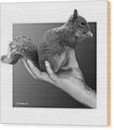 Hand Full Of Squirrel Wood Print