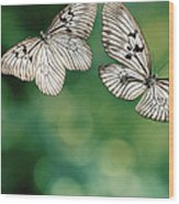Handkerchief Butterfly Or Wood Nymph Wood Print