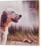 Handsome Hunter. English Setter Wood Print by Jenny Rainbow