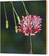 Hanging Coral Hibiscus Wood Print