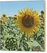Happiness Is A Sunflower Wood Print