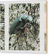 Happy Beetle Wood Print