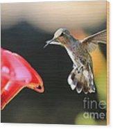 Happy Hummingbird Wood Print
