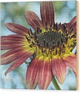 Happy Red Sunflower Wood Print
