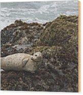 Harbor Seal  Point Lobos State Reserve Wood Print by Sebastian Kennerknecht