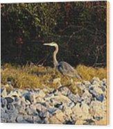 Hard Rock Heron Wood Print