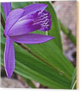 Hardy Orchid 3 Wood Print