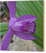 Hardy Orchid 5 Wood Print