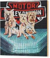 Harley Dogs Wood Print by Carolyn Ardolino