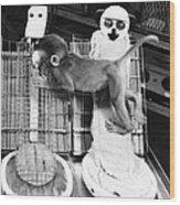 Harlows Monkey Experiment Wood Print