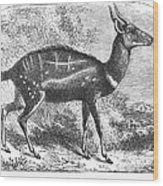 Harnessed Antelope Wood Print
