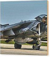 Harrier Wood Print