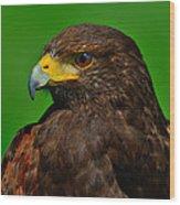Harris's Hawk Wood Print