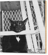Harry One Twisted Cat Wood Print