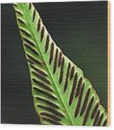 Hart's Tongue Fern Wood Print
