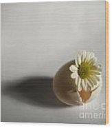 Hatching Flower Photograph Wood Print