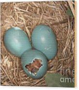 Hatching Robin Nestlings Wood Print