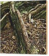 Hawaiian Cypress Wood Print by Micah May